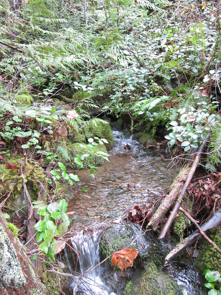 The creek running through the property.