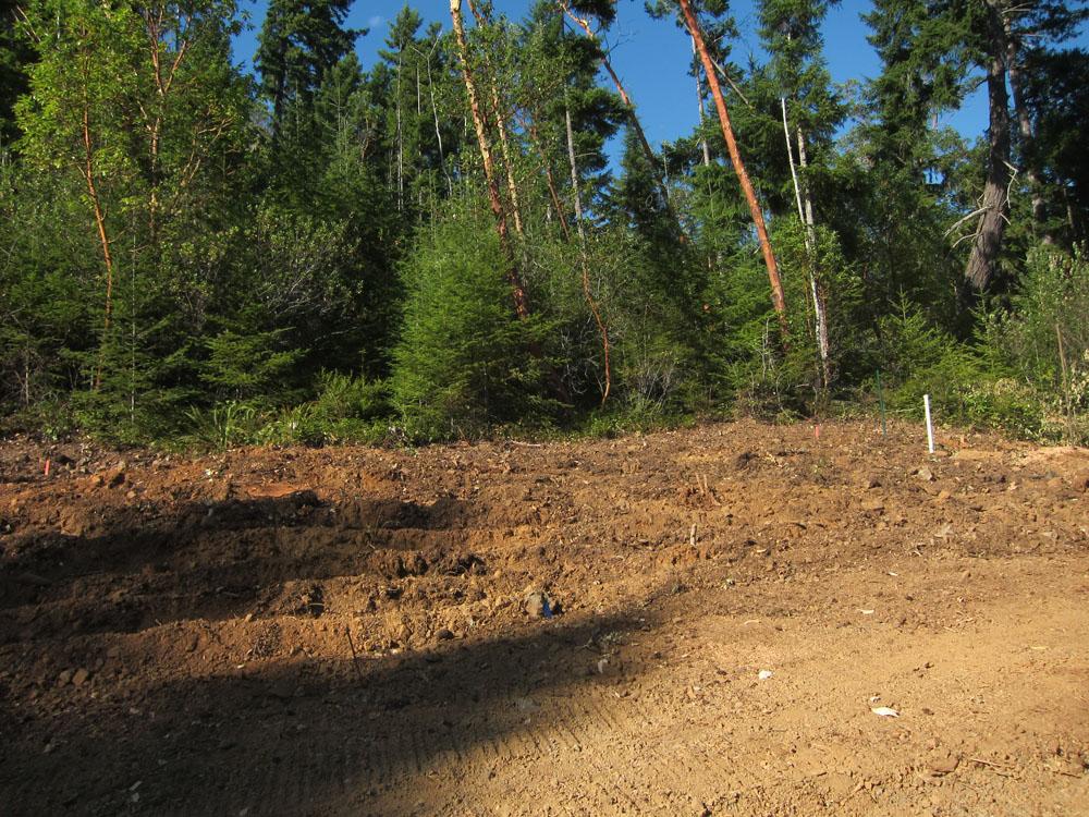 The drain field.