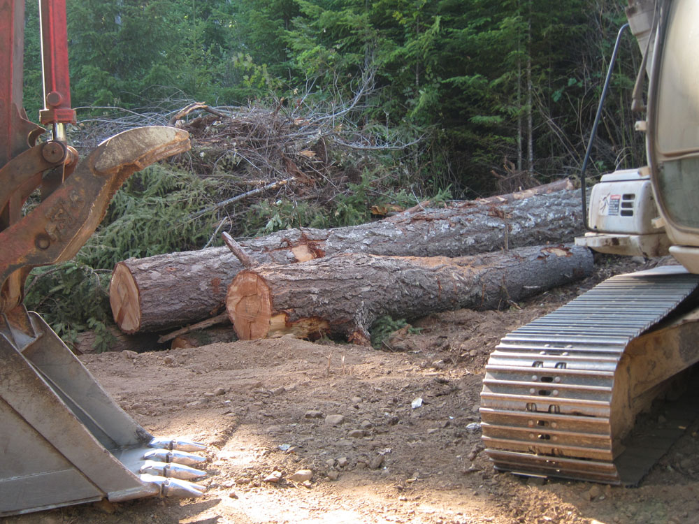 Trees downed in the making of the drain field.  This one was a beauty, but it will also make beautiful fires.